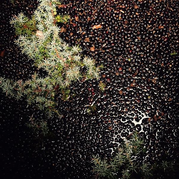 Crossbill Highland Gin - Scottish Juniper